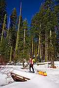 Backcountry skier crossing bridge in Crescent Meadow, Giant Forest, Sequoia National Park, California