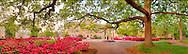Old Well Azaleas Tree