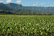 The taro fields in Hanalei Valley, Kauai, Hawaii.