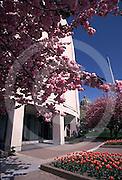 Harrisburg, PA, State Museum, Spring Flowering Tree