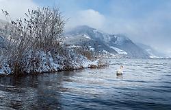 19.04.2017, Zell am See, AUT, Wintereinbruch in Salzburg, im Bild ein Schwan im Zeller See // A swan in Lake Zell, Zell am See, Austria on 2017/04/19. EXPA Pictures © 2017, PhotoCredit: EXPA/ JFK