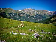 Landscape of Collegiate Peaks Wilderness Colorado Rocky Mountains