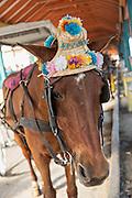 A carriage horse waits for tourists at Prince George Wharf, Nassau, Bahamas, Caribbean