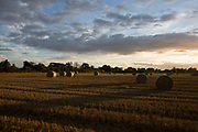 Sunset over field of rolled straw near Thirsk, North Yorkshire, England, UK. Golden light at sundown illuminates these rolled straw bails as the clouds light up over this agricultural landscape.