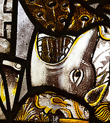 Saint Nicholas chapel, Gipping, Suffolk, England, UK medieval stained glass of east window dog or boar with peacock feathers
