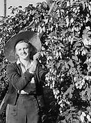 9969-4473. Margaret Backley picking hops, Riverside Hop Farm, Newberg, Oregon. September 19, 1939.