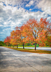 A Row of Vibrant Autumn Trees on Ahden Knight Hampton Memorial Lake at August A. Busch Memorial Conservation Area in Saint Charles, Missouri