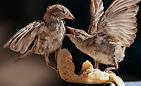 Birds Animals Nature