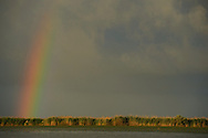 Rainbow and Storm clouds over the reed beds, Phragmites communis, Danube delta rewilding area, Romania