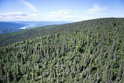Aerial views of boreal forest north of Dawson City, Yukon