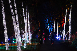 © Licensed to London News Pictures. 21/11/2017. London, UK. Visitors view illuminated trees at the opening of Christmas at Kew at Royal Botanical Gardens, Kew. The spectacular displays are illuminated by over one million tiny twinkling lights placed all over Kew Gardens - open Wednesdays – Sundays from 22 November 2017 – 2 January 2017. London, UK. Photo credit: Ray Tang/LNP
