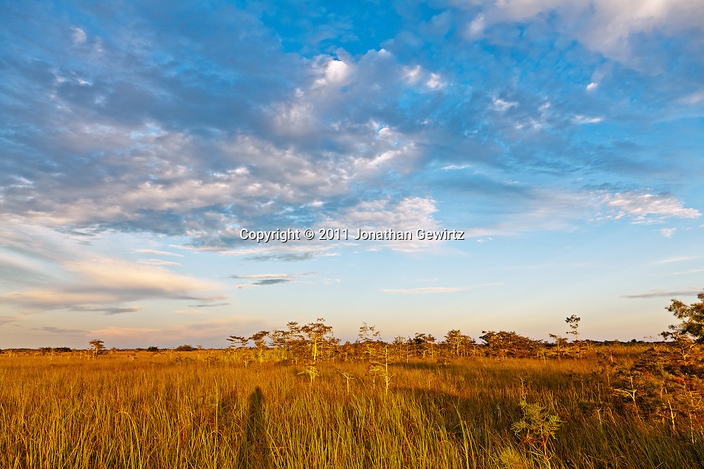 """Golden sunlight in the early morning on the """"River of Grass"""" sawgrass prairie in Everglades National Park. WATERMARKS WILL NOT APPEAR ON PRINTS OR LICENSED IMAGES."""
