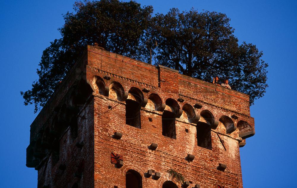 Guinigui Tower in Lucca