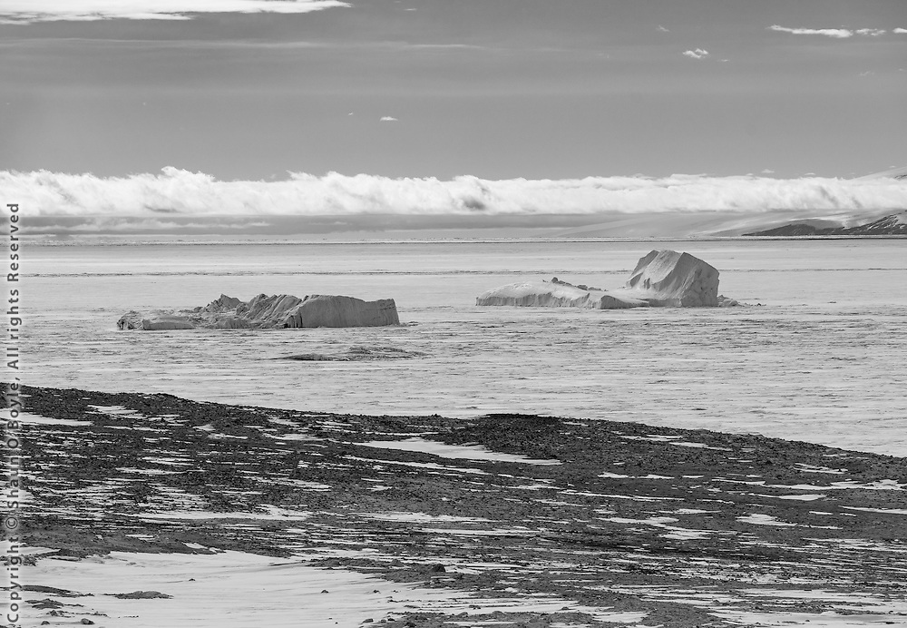 Icebergs off shore from Marble Point