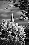 """The sun highlights the cross atop the steeple of the Lutheran Church in Geneva. Dark, gnarly branches of a an oak tree in the shadow make for sense of conflict between the """"dark"""" and the """"light"""". Even the crow perched on the cross lends itself to the feeling of opposing forces."""