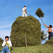 Traditional haymaking in Botiza, Maramures, Romania. Hay meadows that do not receive artificial fertilisers are very rich wildlife habitats especially for flowering plants, insects and birds but they have largely been lost in intensively farmed areas.