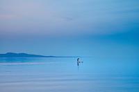 A man and his dog paddleboard on the calm ocean along Cordova Bay, Victoria, BC, at dusk.