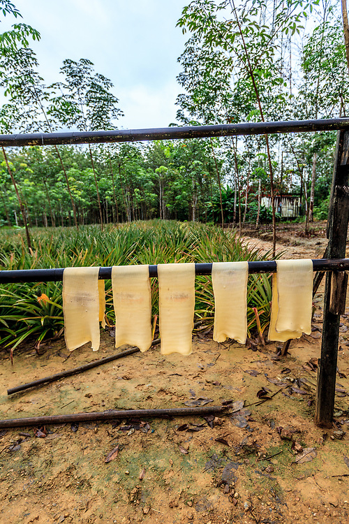 A rubber plantation in Thailand. The rubber sheets are dried before taken to the market.