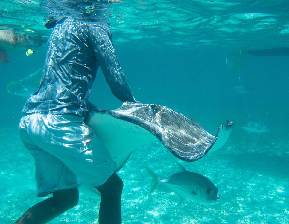 Hol Chan, Belize 8/31/2012.Jamal feeding a stingray at Shark Ray Alley..Alex Jones / www.alexjonesphoto.com