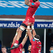 DUBLIN, IRELAND: October 16: Blade Thomson #8 of Scarlets wins a line out during the Leinster V Scarlets, United Rugby Championship match at RDS Arena on October 16th, 2021 in Dublin, Ireland. (Photo by Tim Clayton/Corbis via Getty Images)