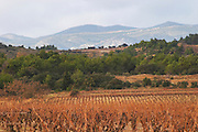 Domaine Piccinini in La Liviniere Minervois. Languedoc. France. Europe. Vineyard. Mountains in the background.