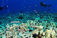 Reef's End, Molokini Crater, Maui Hawaii