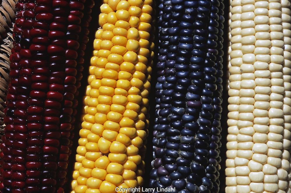 Hopi, corn, Native American, Indian, Arizona,