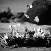 """""""Butterflies""""                                                       Zimbabwe<br />  A hot, dusty day on the road through Chitake."""