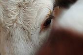 Eläinsuojelukeskus Tuulispää Animal Sanctuary
