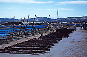 Fishing boats and nest on quayside in port harbour, Calvi, Corsica, France in late 1950s
