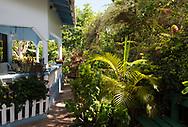 Tropical plants surrounding Gemma Fleming's house and porch overlooking her Gemrose Eden Garden, St. David's, Grenada, West Indies, the Caribbean