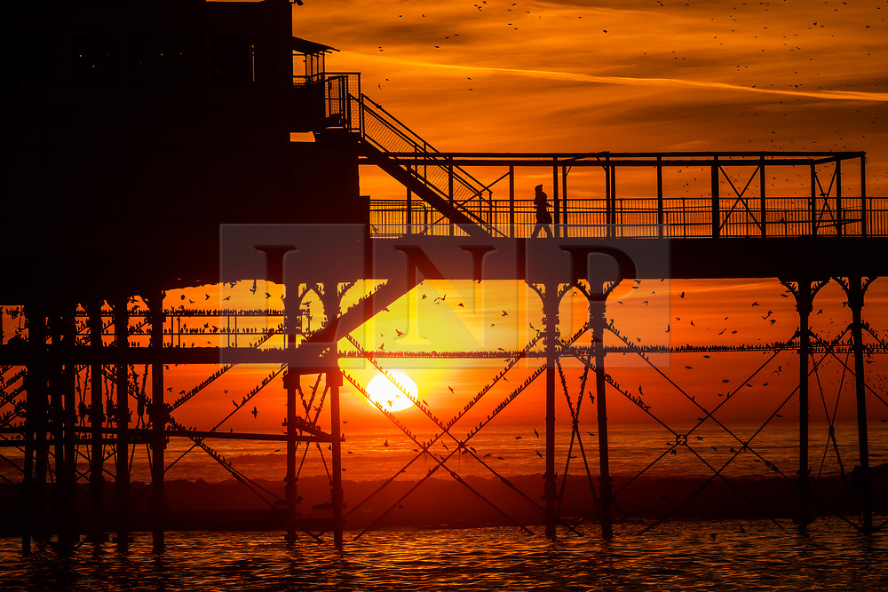 © Licensed to London News Pictures. 14/02/2019. Aberystwyth, UK. As the sun  sets dramatically in the west at the end of a glorious day of spring-like warm weather, people line the pier in  Aberystwyth Wales to watch the tens of thousands of starlings swooping  to roost for the night on the forest  of cast iron legs underneath  Aberystwyth's Victorian seaside pier. Photo credit: Keith Morris/LNP