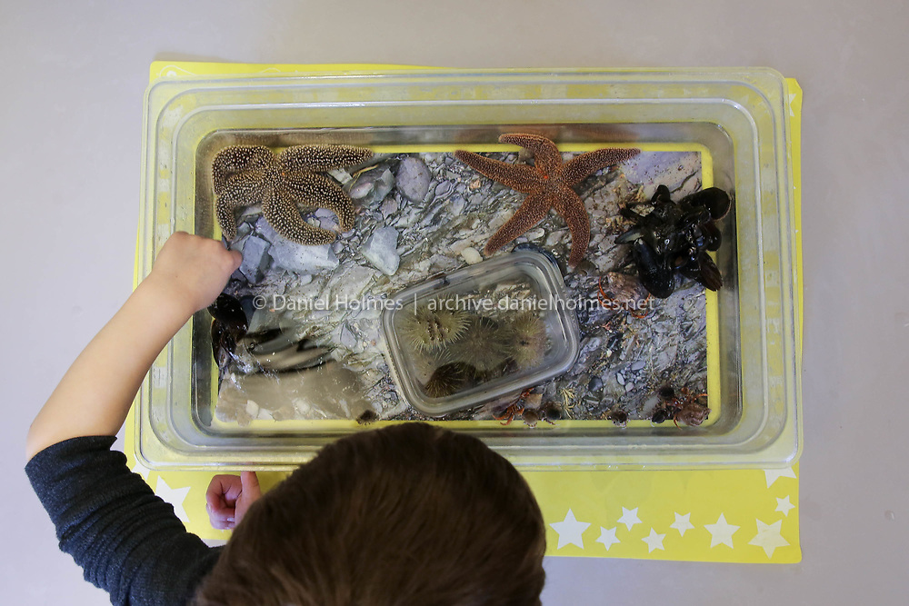 (3/10/18, ASHLAND, MA) A child touches some sea creatures during the Tidepools event hosted by the New England Aquarium at the Ashland Public Library on Saturday. [Daily News and Wicked Local Photo/Dan Holmes]