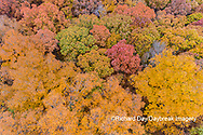 63876-02507 Aerial view of fall color trees Stephen A. Forbes State Park Marion Co. IL
