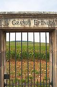 Vineyard. Les Grands Epenots. Pommard, Cote de Beaune, d'Or, Burgundy, France