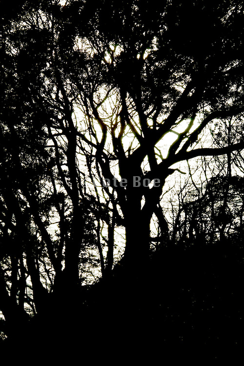 silhouetted trees on edge of rock by the sea