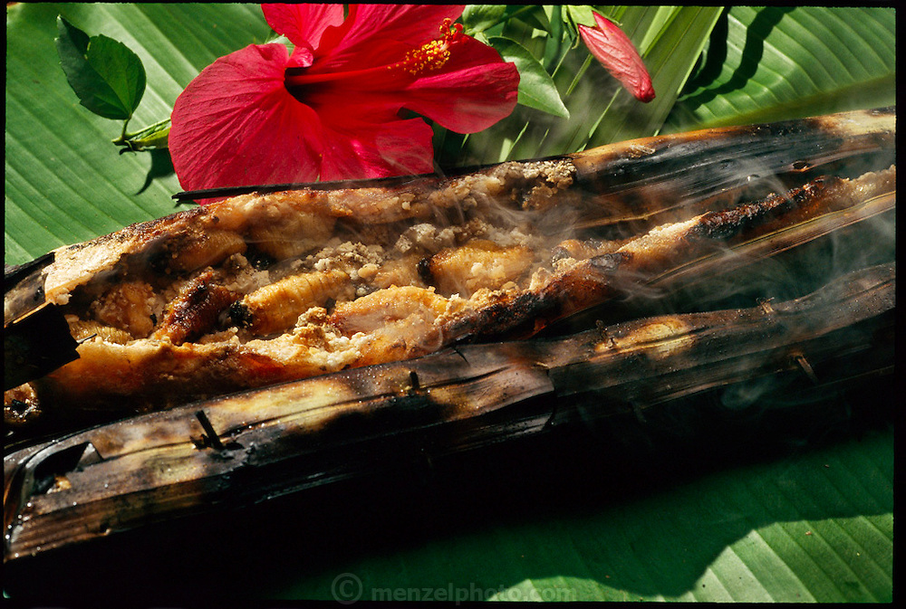 "A steaming sago ""tamale"" of sorts (actually, the dish is reputed to be without a    name) is made from sago grubs (Rhynchophorus ferrugineus, the larvae of Capricorn beetles), and sago flour wrapped in a sago palm leaf and roasted over a fire, Sawa Village, Irian Jaya, Indonesia. The resulting dish is like a cooked pastry, with a chewy, slightly sweet crust and the grubs taste like fishy bacon. (pages 72,73)"