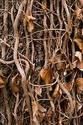 Tree with leaves and small bough.Boom met bladeren en kleine takken