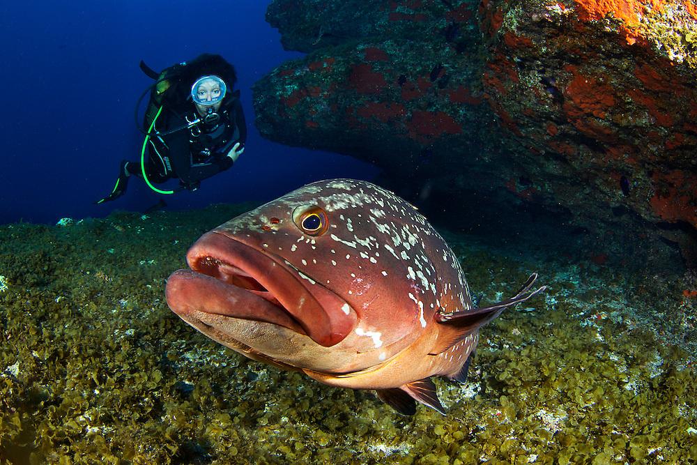 16/Octubre/2014 Islas Canarias. El Hierro<br /> Sus Anita buceando junto a un mero en El Bajón, durante el 18º Open Fotosub.<br /> <br /> © JOAN COSTA