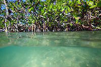 Split-view of a mangrove forest