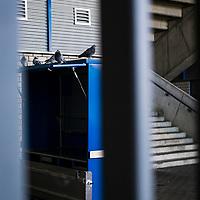 22.03.2020, Vonovia Ruhrstadion , Bochum<br /> <br /> im Bild | picture shows:<br /> <br /> Rund um das Bochumer Vonovia Ruhrstadion herrscht komplette Leere. Lediglich ein paar Tauben sitzen auf einem Verkaushaeuschen. <br /> <br /> Foto © nordphoto / Rauch