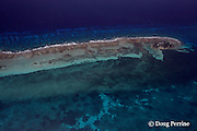 Tobacco Caye, on southern Belize Barrier Reef, Belize, Central America  ( Caribbean ), showing spur and groove coral formations on outside and grass flats on inside of reef