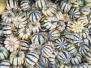 Fall striped squash harvest at a farmer's market, Minnesota, USA.