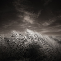 A bit more dune