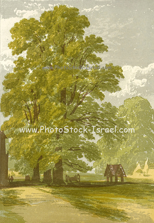 The Elm (First and Second Tints) from the book  The theory and practice of landscape painting in water-colours illustrated by a series of twenty-six drawings and diagrams in colours and numerous woodcuts by Barnard, George, 1807-1890 Published in 1885 by George Routledge and Sons London