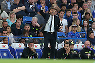 Antonio Conte, the Chelsea manager shouting at his players from the dugout. Premier league match, Chelsea v West Ham United at Stamford Bridge in London on Monday 15th August 2016.<br /> pic by John Patrick Fletcher, Andrew Orchard sports photography.