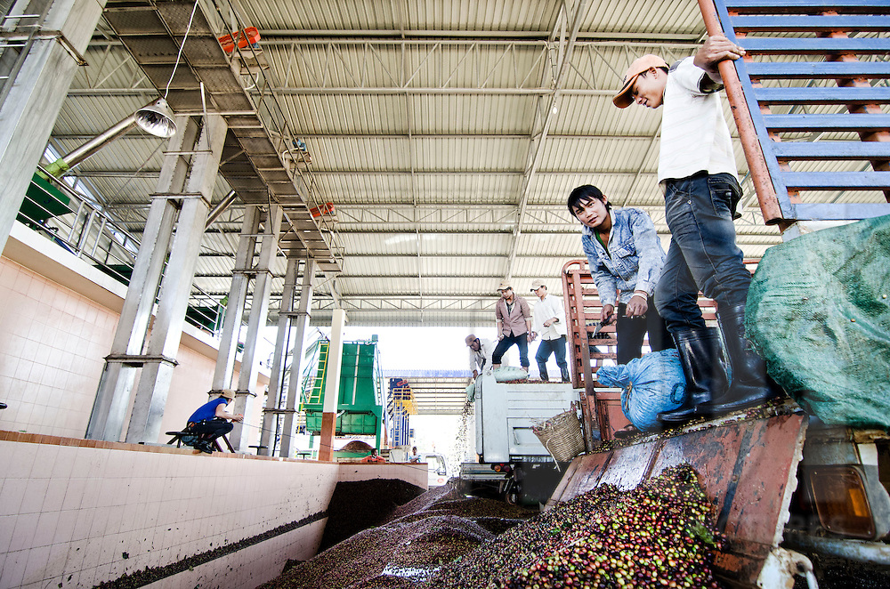 Delivery of fresh coffee beans in a warehouse. Packsong, Laos, Asia