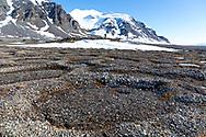 Daudmannsoya, Svalbard, Norway, Europe