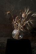 dried brown collored various wild plants and wheat bouquet still life