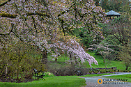 Spring bloom at the Arboretum in Seattle, Washington, USA